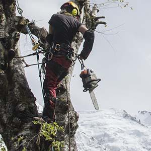 Tree care services profressional tree surgeon
