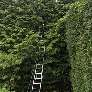 Hedge trimming service in Chamonix