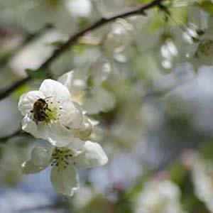 Tree care services Chamonix